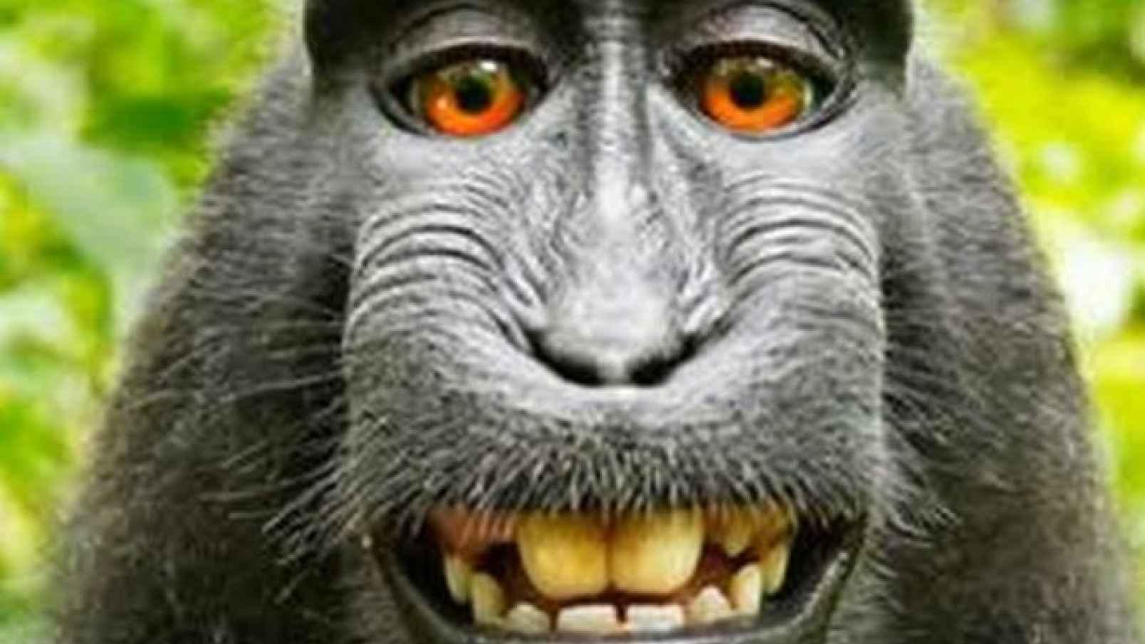 Monkey citizens