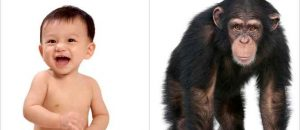 Comparing People to Monkeys and Apes Can't Be Racist Because It's 'Science'
